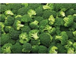Chou brocoli Bio
