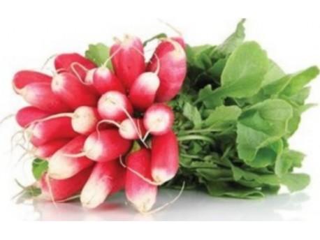 Radis rose Bio