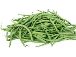 Haricots vert Bio