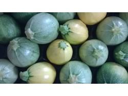 Courgettes rnodes Bio