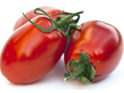 Tomate ronde Roma Bio