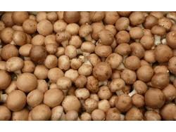 Champignon brun Bio