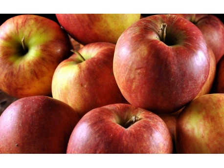 Pomme Elstar Bio